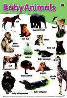 Baby animals early learning posters