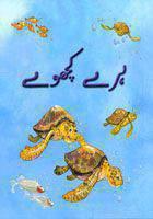 Haray Kachhway