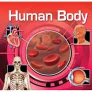 The Human Body Lenticular Books -