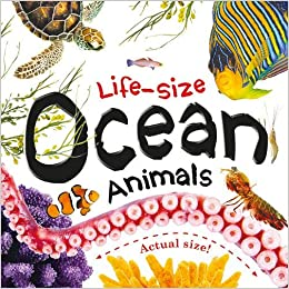 Life-size: Ocean Animals - Board book