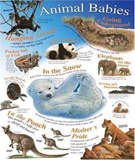 Animal Babies (Natural History Wallchart)