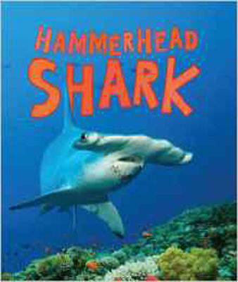 Discover Sharks: Hammerhead Shark Hardcover